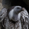 """© 2015 Steve Schroeder - """"Beware the Jubjub bird . . . ."""""""