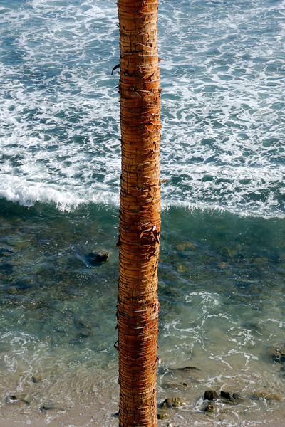 See palm and sea.