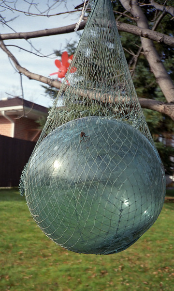 You can find Japanese fishing floats and empty Saki bottles all over the Enewetak islands.  We found this large ball on one of our dives and hauled it all the way back to Kingston Canada where it hung in a tree for years reminding us of our two great Enewetak trips.