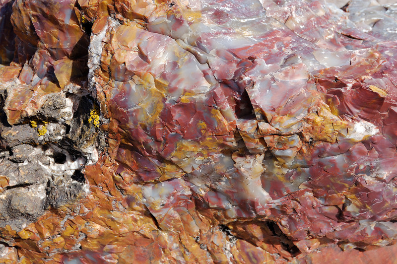 The colors in petrified wood are gorgeous. This is not processed or polished. It's raw stone in the petrified forest national park near Holbrook Arizona.