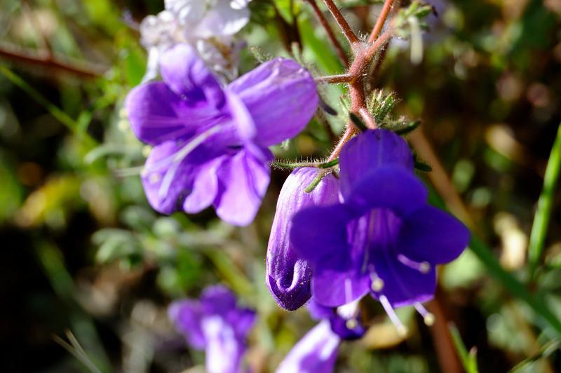 Zambian flower.