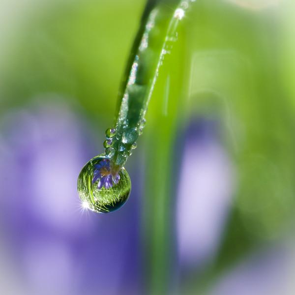 Morning Dew. My back yard