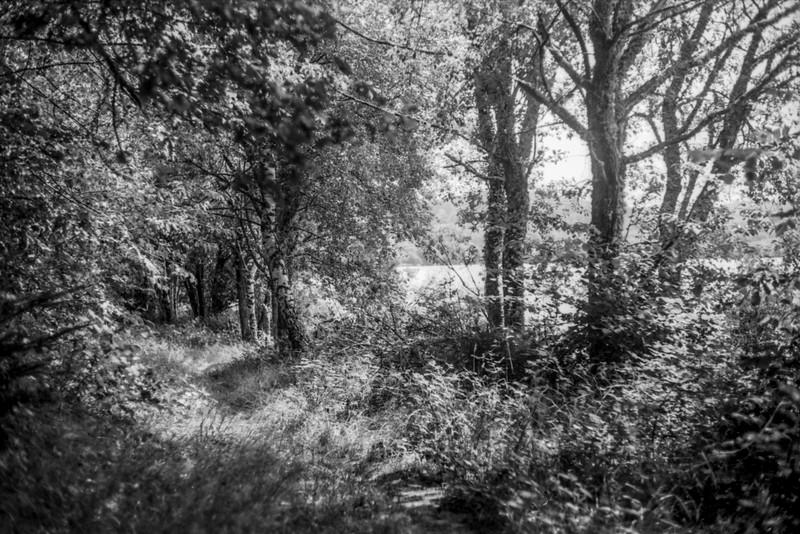 Nature monochrome