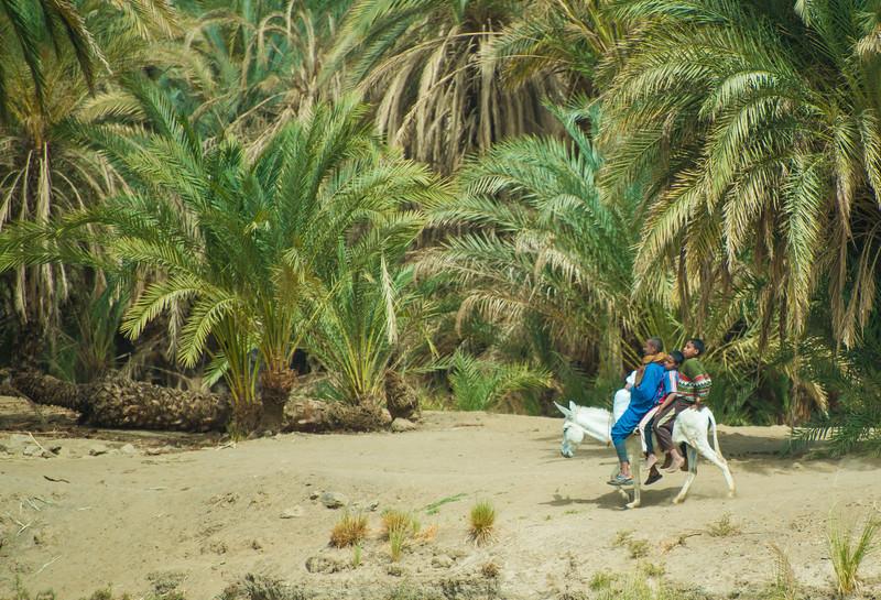 Three on a donkey, Nile River, Egypt