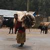 Woman brings firewood to market, Mt. Entoto, Ethiopia.