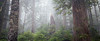 North Cascades, Thornton Lakes - Foggy forest with tall snag centered between two trees