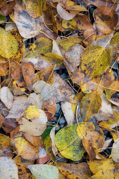 Kittitas, Cle Elum - Fallen leaves of assorted colors