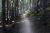 Rainy Pass, Cutthroat Pass - Pacific Crest Trail winding through dark timber