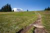 Rainier, Grand Park - Trail cresting a hill in the upper meadow