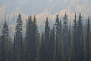 Harts Pass, Windy Pass - Line of tall evergreens with larch in the background on a smoky day