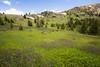 Pasayten, Horseshoe Basin - Meadows at Sunny Pass