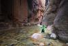 Zion, The Narrows - Woman hiker navigating river between tall canyon walls