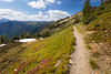 Harts Pass, Windy Pass - Woman walking on Pacific Crest Trail above green basin