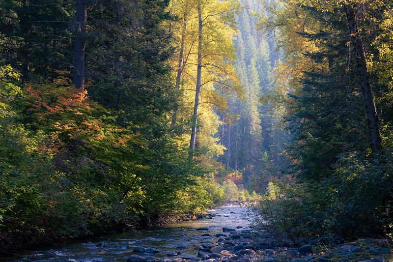 Leavenworth, Tumwater - Creek scene with tall cottonwoods and soft light