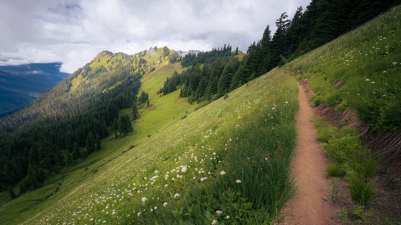 Whatcom, Excelsior - Flower meadow and trail on the slope below Excelsior Peak