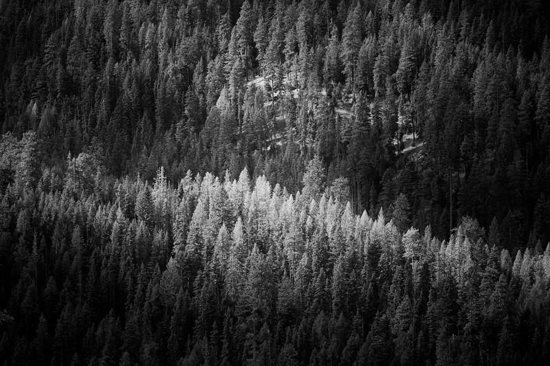 Kittitas, Blewett Pass - Trees on distant ridge lit by a break in the clouds