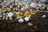 Kittitas, Cle Elum - Fallen yellow leaves alongside a stream