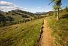 Harts Pass, Windy Pass - Pacific Crest Trail approaching Buffalo Pass