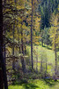 Kittitas, Teanaway - Meadow in the forest