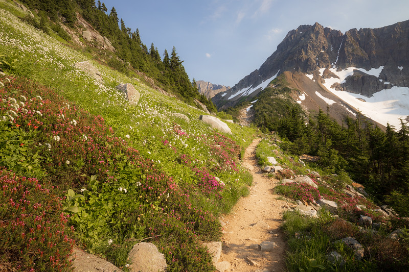 North Cascades, Cascade Pass - Trail passing pink and white flowers near the pass