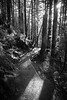 North Bend, Rattlesnake - Path through the forest with sun star, black and white