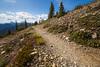 Harts Pass, Windy Pass - Trail passing some small flowers near corner