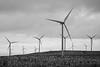Kittitas, Wild Horse - View of windmill farm, black and white