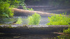 Western, Ross Creek Cedars - Logs down over creek with fog