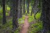 Kittitas, Mt. Baldy - Trail winding through trees in a flat