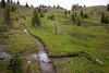 Pasayten, Horseshoe Basin - Muddy trail approaching Sunny Pass on a cloudy day