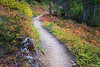 Rainy Pass, Cutthroat Pass - Trail passing through orange and green huckleberry bushes
