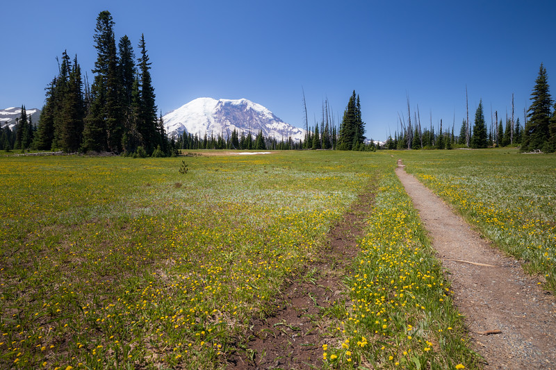 Rainier, Grand Park - Two trails and trees in the upper meadow