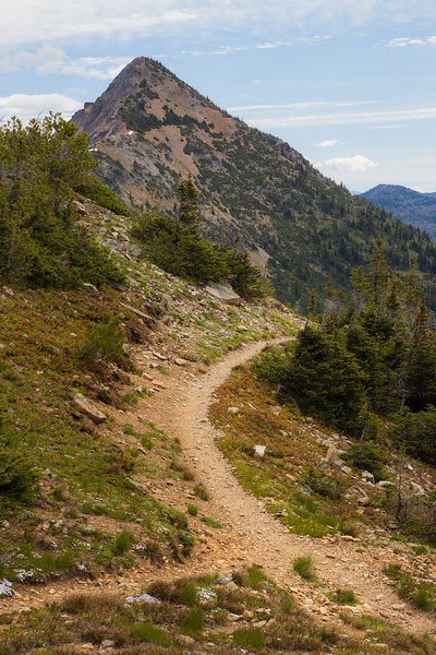 Harts Pass, Tatie Peak - Trail curving along ridge with peak