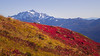 Whatcom, Yellow Aster Butte - Mt. Shuksan and bright red hillside