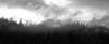 Easton, Pond - Trees on flat ridge line in fog, black and white