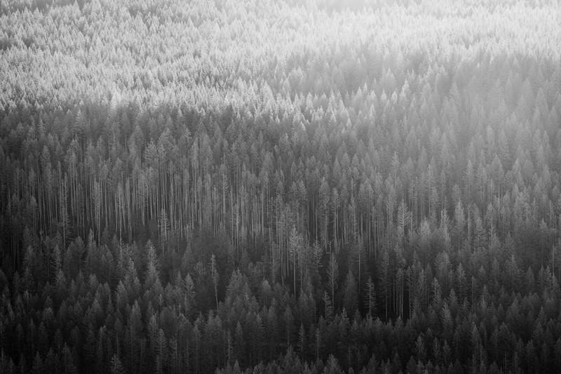 North Bend, Rattlesnake - Forested hillside backlit by sun, black and white