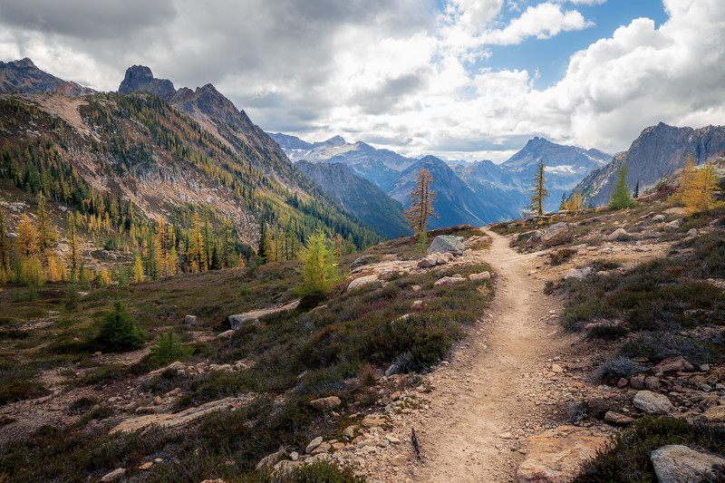 Rainy Pass, Cutthroat Pass - Bend in trail leading towards valley view with two larch trees guarding trail, close in