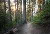 North Cascades, Cascade Pass - Sun illuminating treetops above trail