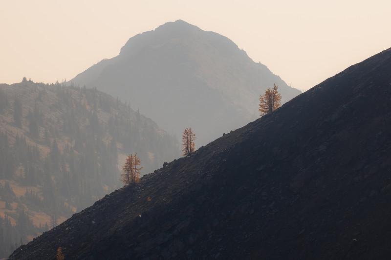 Harts Pass, Windy Pass - Three larch trees on a ridge on a smoky day