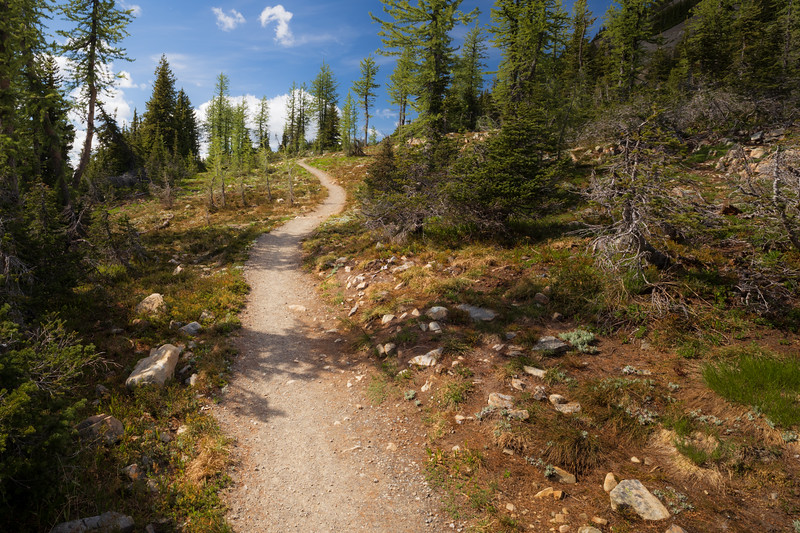 Harts Pass, Windy Pass - Pacific Crest Trail winding through some larch trees