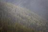 Kittitas, Mt. Baldy - Light falling on a forested ridge