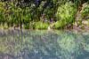 Kalaloch, Ruby Beach - Seaweed reflected in tide pool