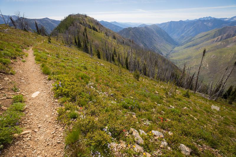 Harts Pass, Tatie Peak - Trail near the first corner looking east