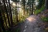North Cascades, Cascade Pass - Sun illuminating trail through trees