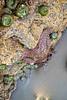 Kalaloch, Ruby Beach - Purple starfish in tide pool