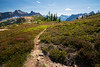 Rainy Pass, Cutthroat Pass - Trail leading through heather meadows above Cutthroat Pass