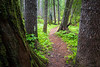 Western, Ross Creek Cedars - Trail winding through tall trees