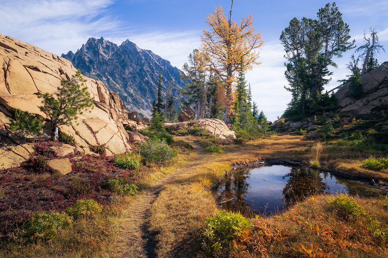 Stuart, Ingalls - Trail passing a small pond with Mt. Stuart and larch tree in background