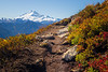Whatcom, Yellow Aster Butte - Low view of trail rounding bend with Mt. Baker in distance