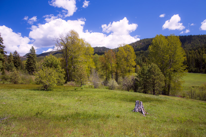 Kittitas, Teanaway - Meadow with a log and trees under a blue sky, wider